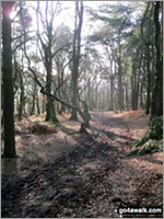 Phytophthora - the plant destroyer threatening our forests, woodlands and heathland