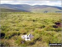 Walk Godor walking UK Mountains in The Berwyns  Powys    Wales