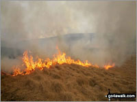 Moorland fires and the Met Office Fire Severity Index