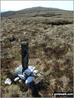 Waun Garnedd-y-Filiast in The Arenigs Area Snowdonia National Park Gwynedd    Wales